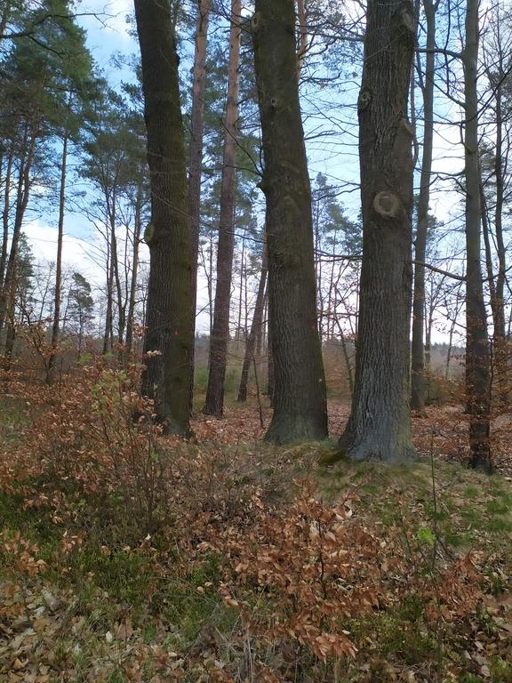 lasy w Mokrej 2