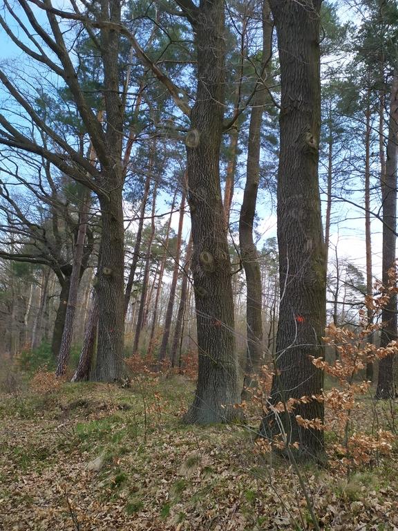 lasy w Mokrej 3