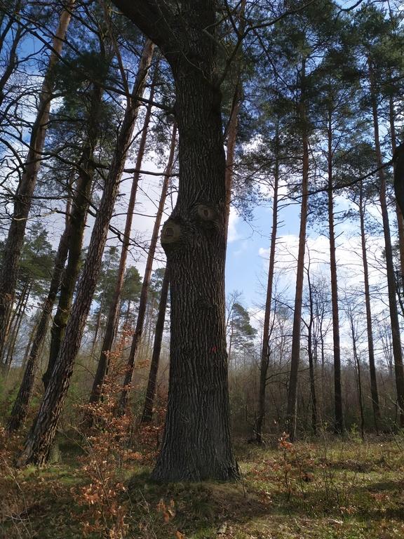 lasy w Mokrej 4