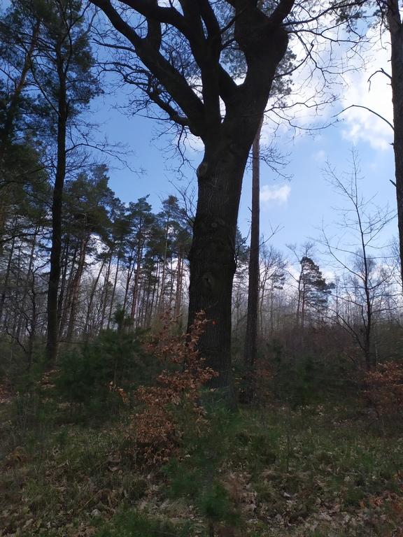 lasy w Mokrej 5