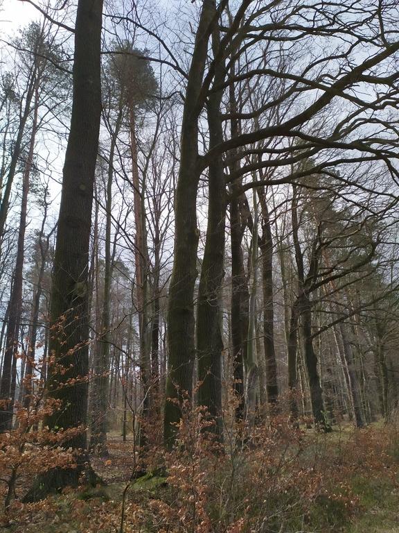 lasy w Mokrej