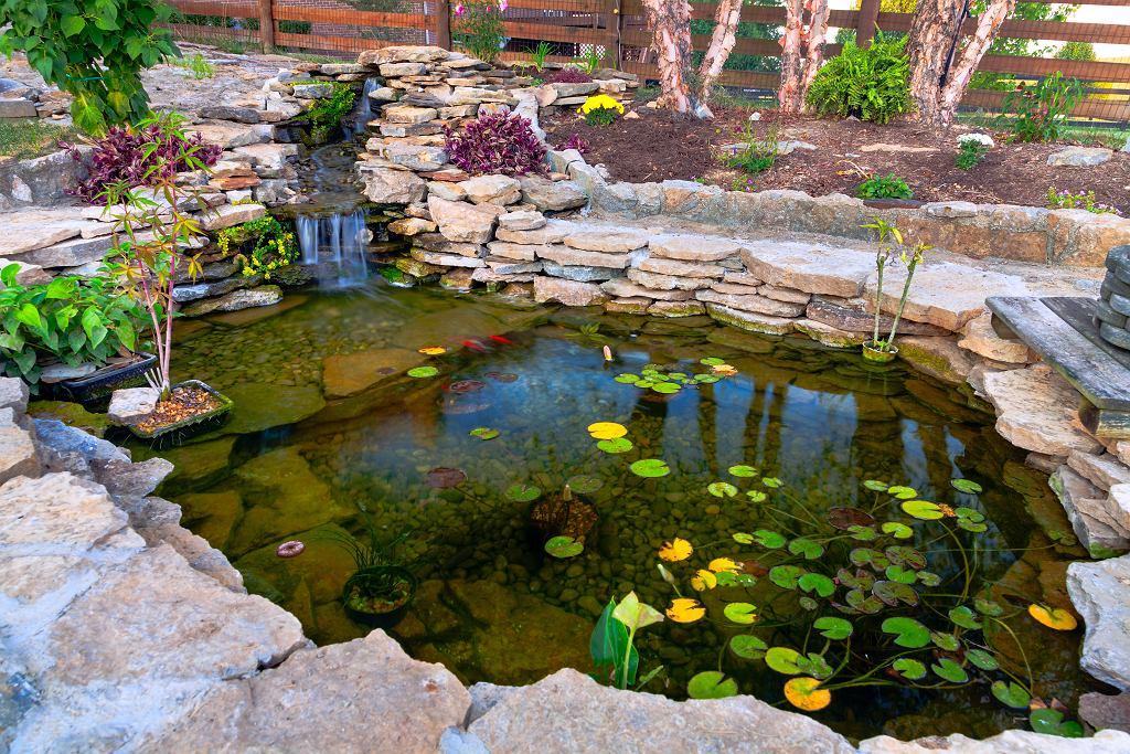 oczko wodne 4 - Shutterstock