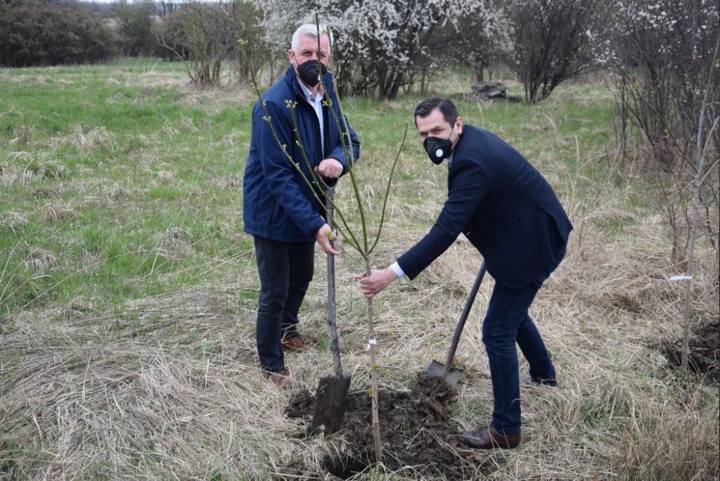 W powiecie częstochowskim sadzą nowe drzewa 4