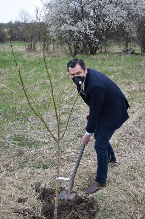 W powiecie częstochowskim sadzą nowe drzewa 5