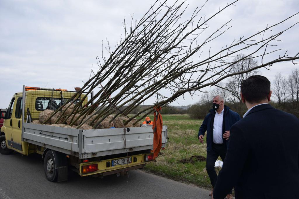 W powiecie częstochowskim sadzą nowe drzewa 1