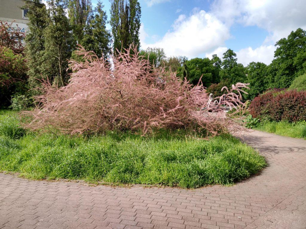 Częstochowski Skwer Solidarności wygląda jak porzucony, zaniedbany ogród, który nie ma właściciela 2
