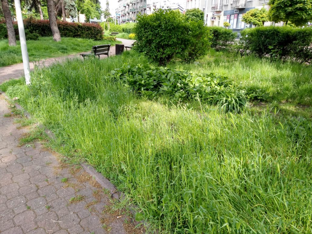 Częstochowski Skwer Solidarności wygląda jak porzucony, zaniedbany ogród, który nie ma właściciela 3