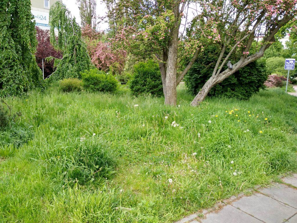 Częstochowski Skwer Solidarności wygląda jak porzucony, zaniedbany ogród, który nie ma właściciela 4