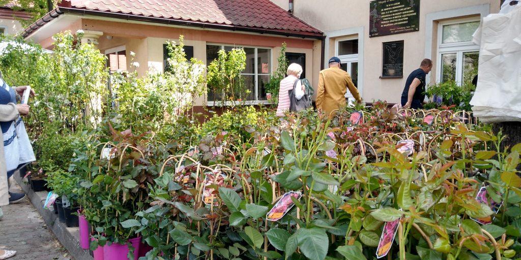 Dzisiaj drugi dzień Targów Ogrodniczych 6
