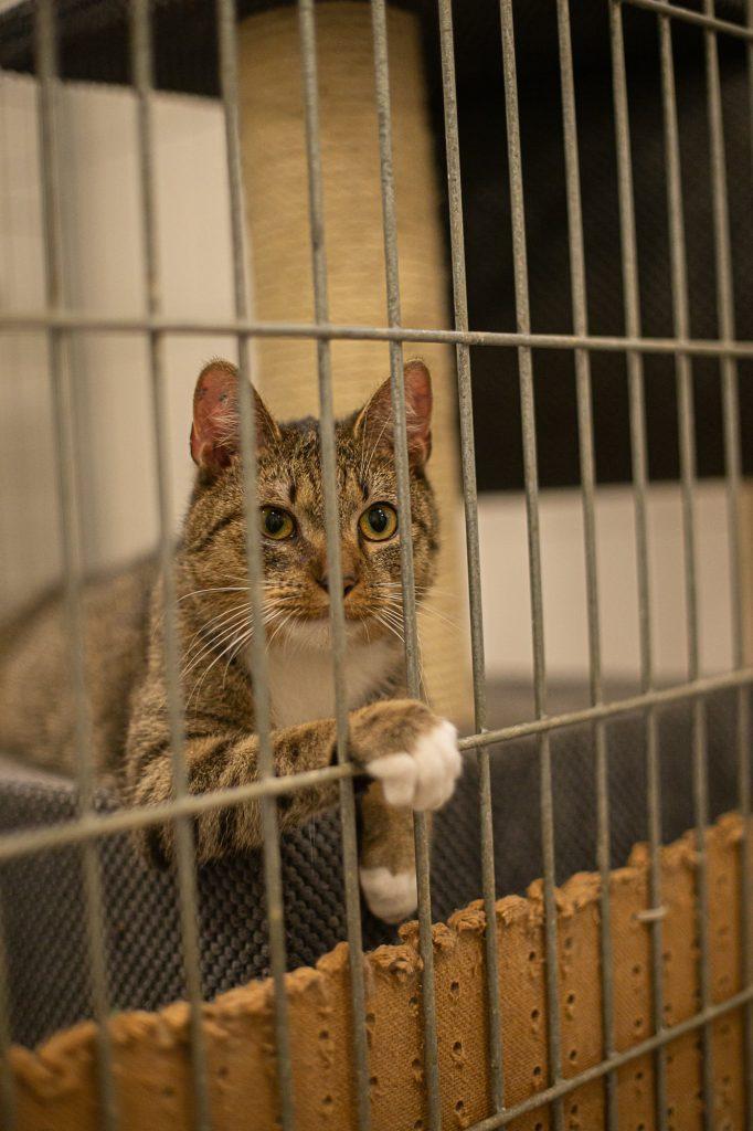 """Bezdomne zwierzęta czekają na dom. Nasza akcja pod hasłem """"Adoptuj mnie"""" trwa 7"""