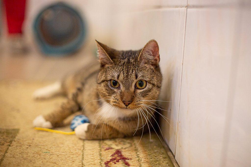 """Bezdomne zwierzęta czekają na dom. Nasza akcja pod hasłem """"Adoptuj mnie"""" trwa 8"""