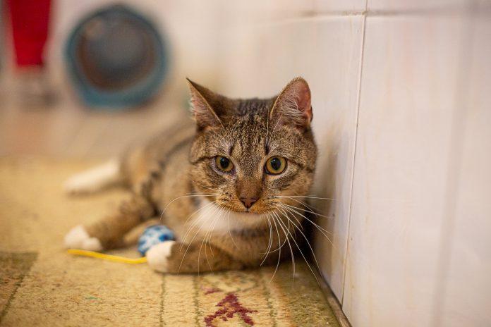 """Bezdomne zwierzęta czekają na dom. Nasza akcja pod hasłem """"Adoptuj mnie"""" trwa 14"""