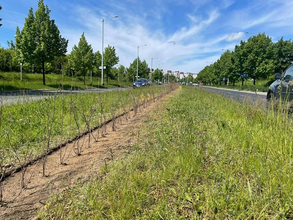 Kolejne rośliny w mieście w ramach projektu Częstozielona 3