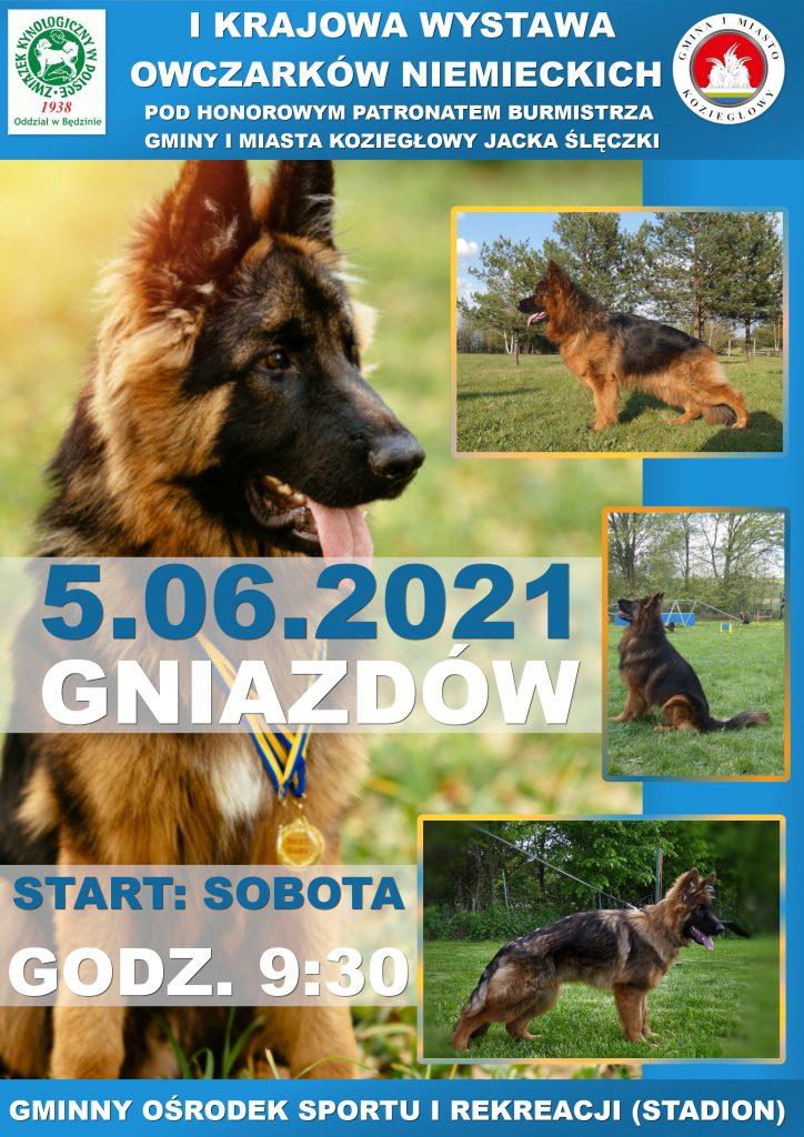 Gmina Koziegłowy zaprasza jutro na wystawę psów. Podziwiać będzie można owczarki niemieckie 1