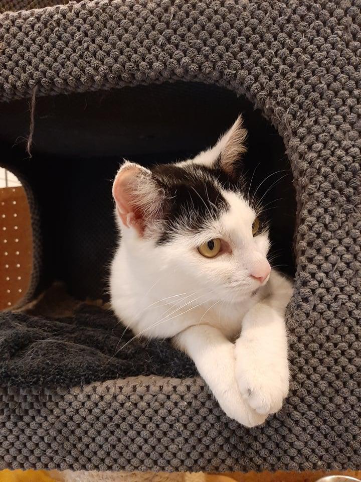 """Bezdomne zwierzaki czekają na nowy dom. Nasza akcja pod hasłem """"Adoptuj mnie"""" trwa 6"""