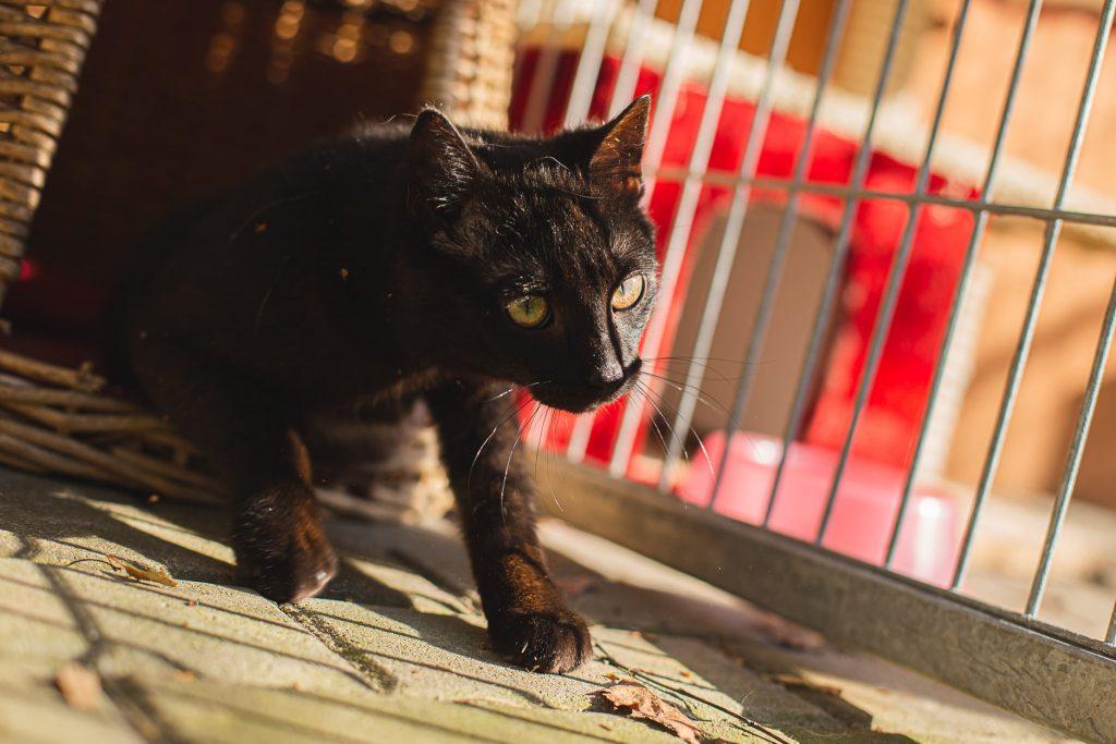 """Bezdomne zwierzęta czekają na dom. Nasza akcja pod hasłem """"Adoptuj mnie"""" trwa 11"""