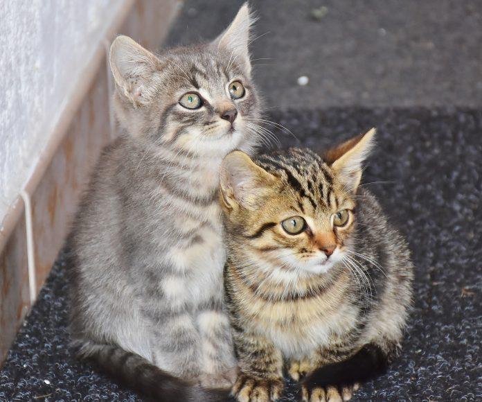 """""""Program opieki nad zwierzętami"""" uchwalony. Częstochowa wyda na bezdomne i potrzebujące pomocy zwierzaki 1,4 mln złotych 2"""