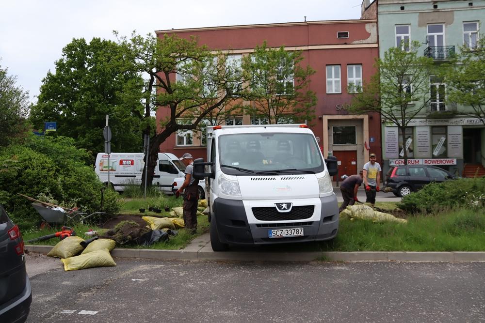 Kolejne rośliny w mieście w ramach projektu Częstozielona 6