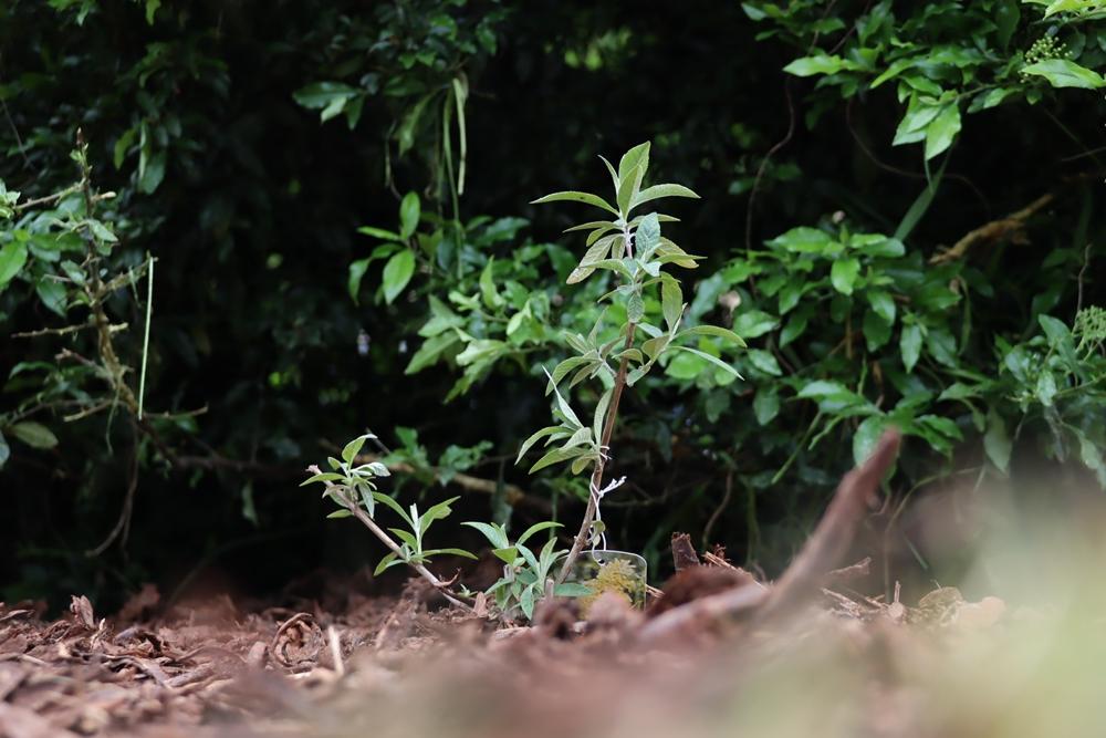 Kolejne rośliny w mieście w ramach projektu Częstozielona 7