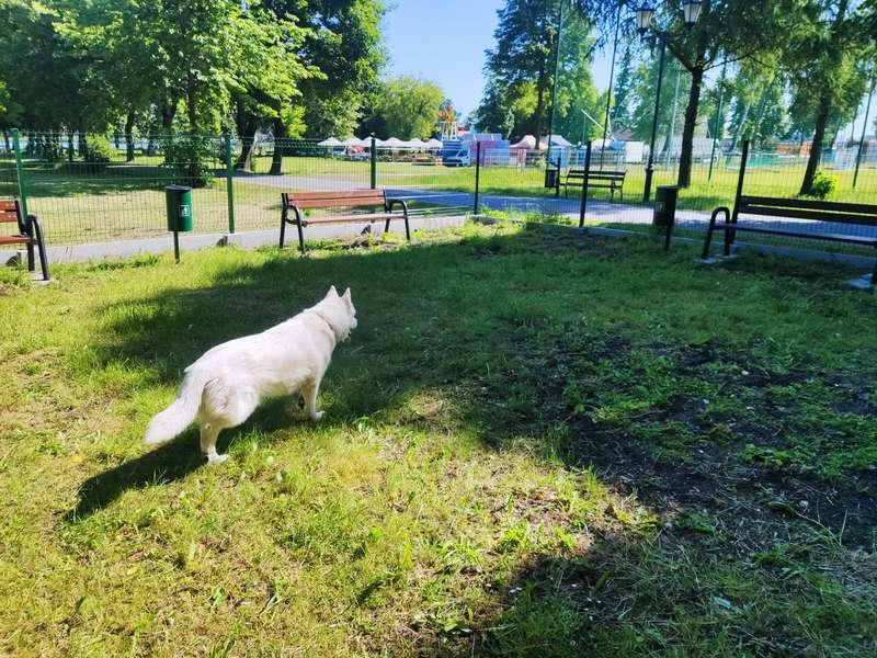 wybieg dla psów 8