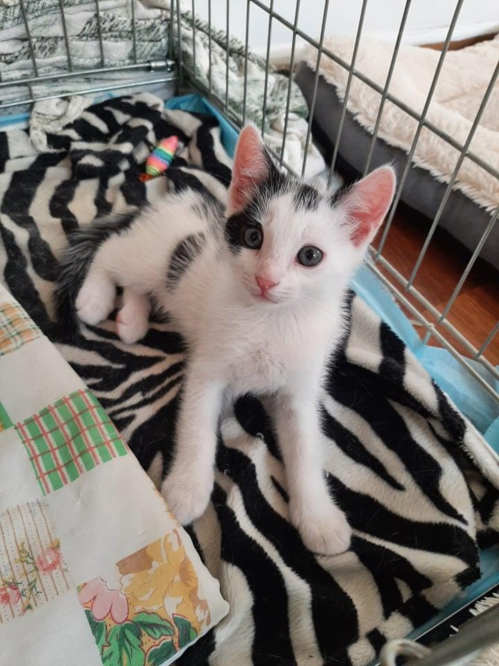 """Szukamy dobrych domów dla bezdomnych czworonogów. Akcja """"Adoptuj mnie"""" trwa. Może Ty przygarniesz cudownego kota lub psa? 2"""
