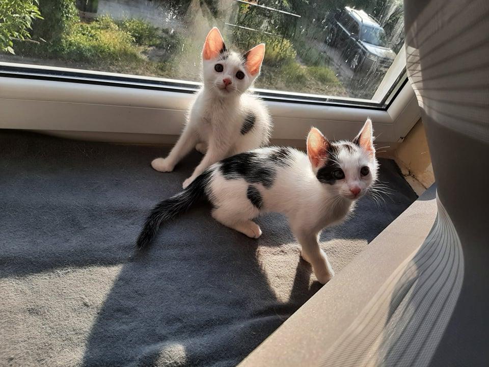 """Szukamy dobrych domów dla bezdomnych czworonogów. Akcja """"Adoptuj mnie"""" trwa. Może Ty przygarniesz cudownego kota lub psa? 3"""
