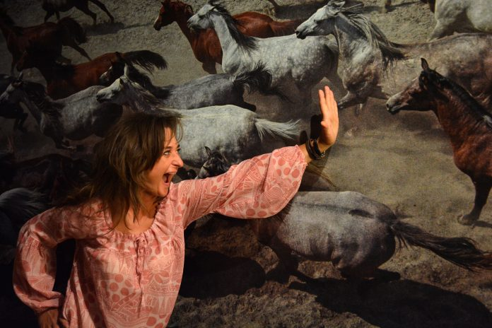 """W niedzielę w Częstochowie odbędzie się parada koni. To wydarzenie towarzyszące wystawie """"Z miłości i wiatru"""" 14"""