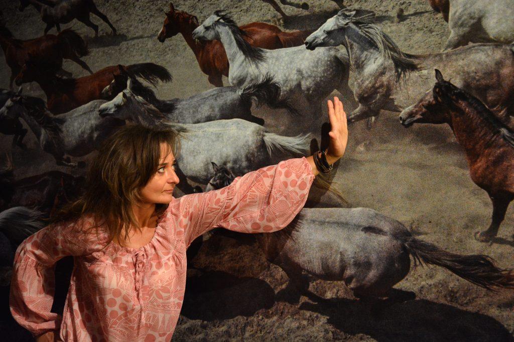"""W niedzielę w Częstochowie odbędzie się parada koni. To wydarzenie towarzyszące wystawie """"Z miłości i wiatru"""" 8"""