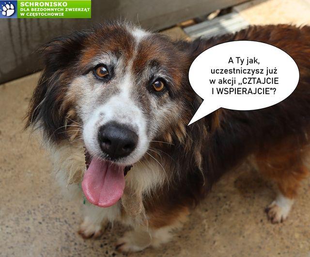 Kup poradnik, pomożesz podopiecznym schroniska dla bezdomnych zwierząt 3