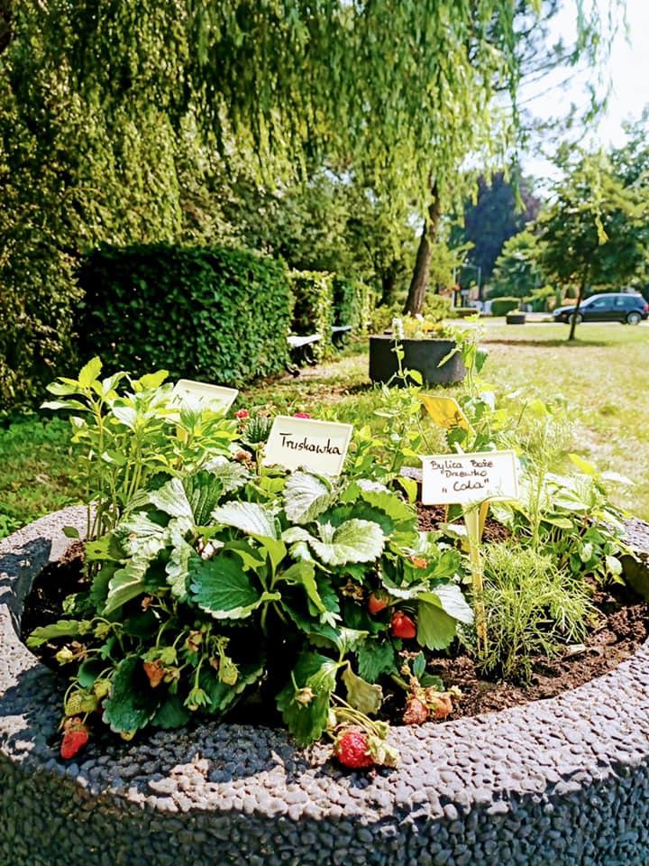 W Lublińcu powstał pierwszy ogródek ziołowy 1