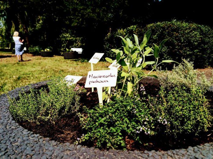 W Lublińcu powstał pierwszy ogródek ziołowy 7