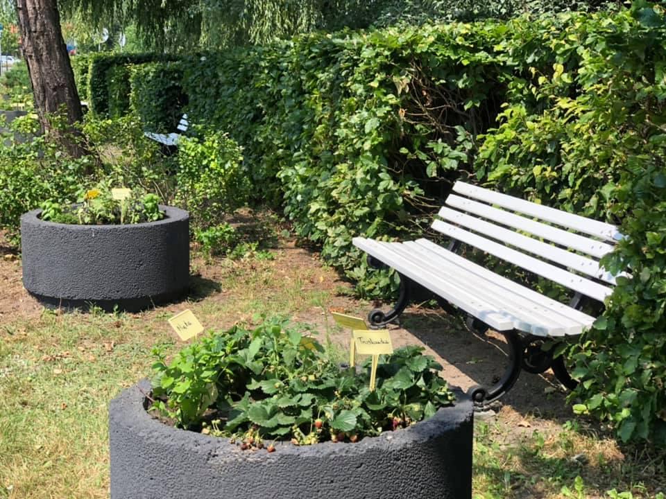 W Lublińcu powstał pierwszy ogródek ziołowy 3