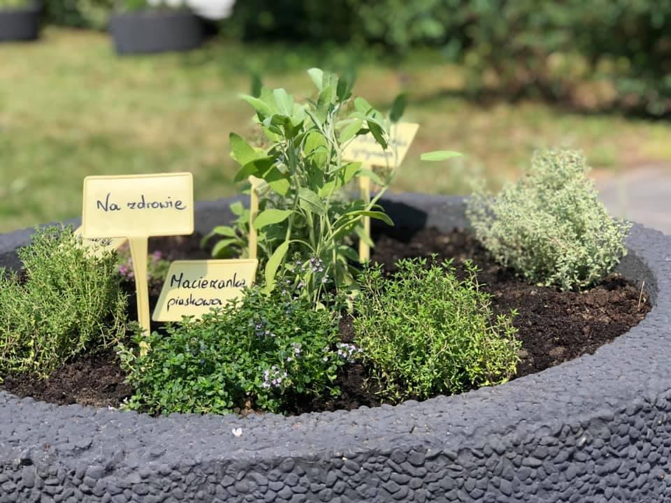 W Lublińcu powstał pierwszy ogródek ziołowy 5