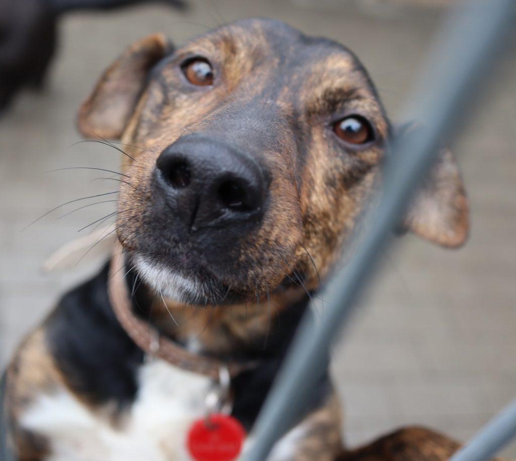 """Bezdomne zwierzaki szukają domów. Dziś kolejna odsłona naszej akcji """"Adoptuj mnie"""" 4"""