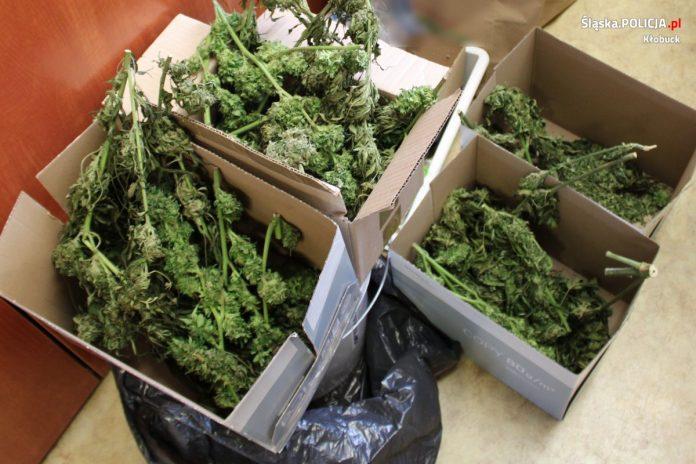 2 kilogramy marihuany 3