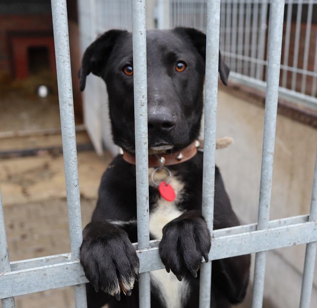 """Bezdomne zwierzaki szukają domów. Nasza akcja """"Adoptuj mnie"""" trwa 8"""