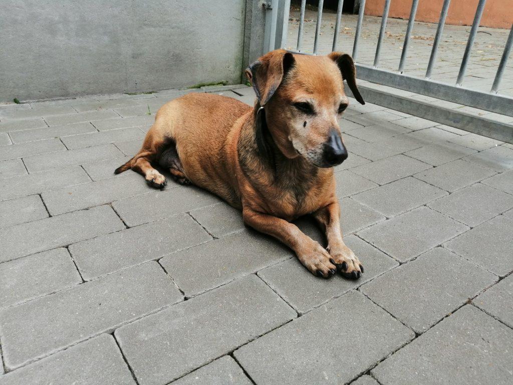 """Bezdomne zwierzaki szukają domów. Nasza akcja """"Adoptuj mnie"""" trwa 12"""