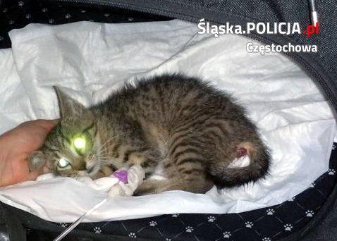 Zwierzęta też czasami potrzebują interwencji policji. Przekonał się o tym pewien kociak, którego uratowali częstochowscy funkcjonariusze 2