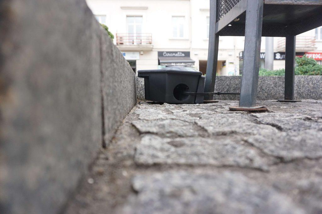 Tępią szczury w centrum Częstochowy 1