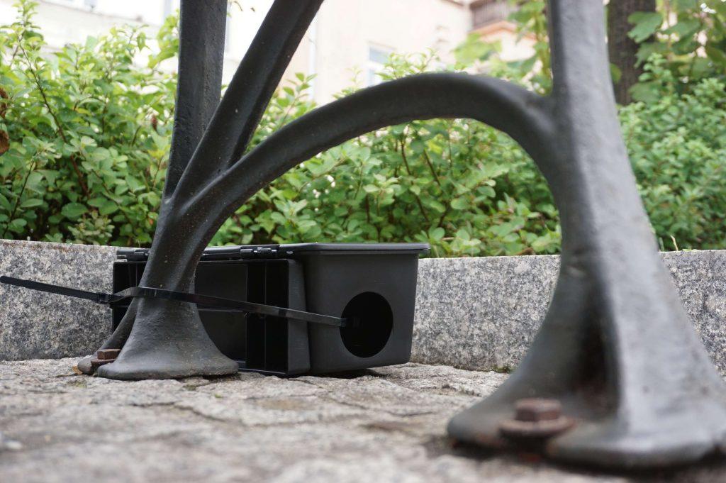 Tępią szczury w centrum Częstochowy 6