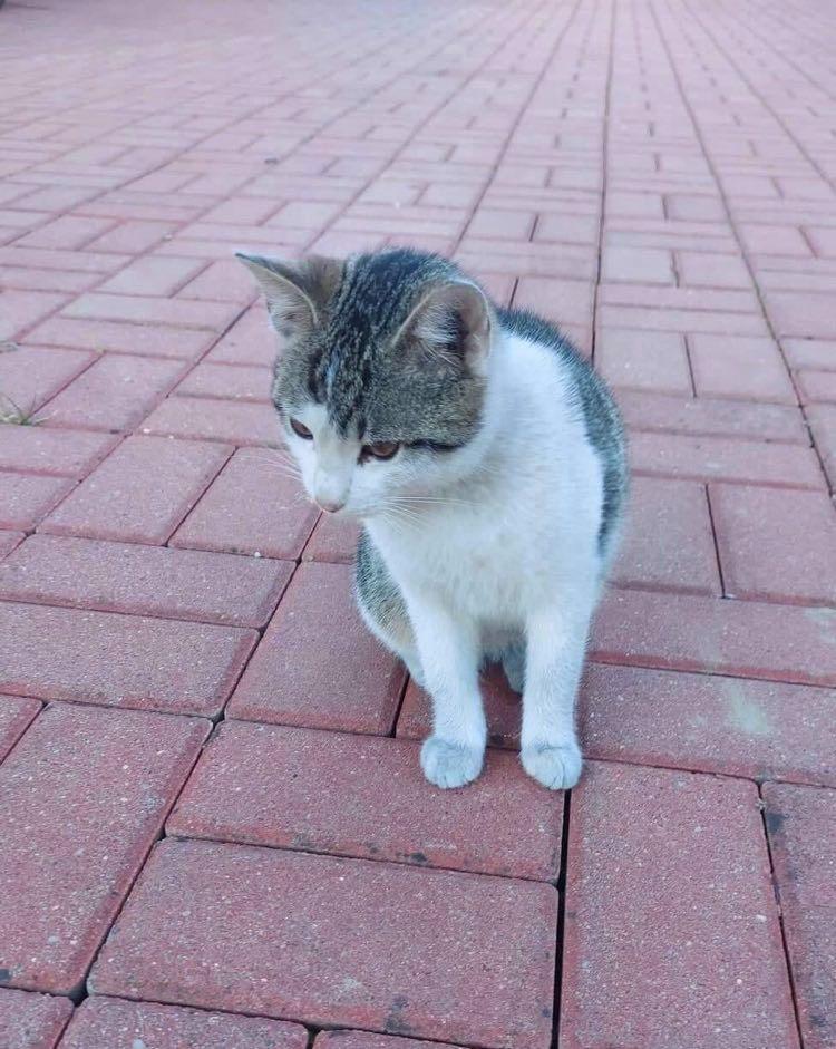 Kotek szuka domu 1