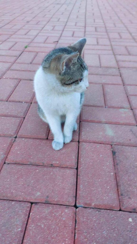 Kotek szuka domu 2