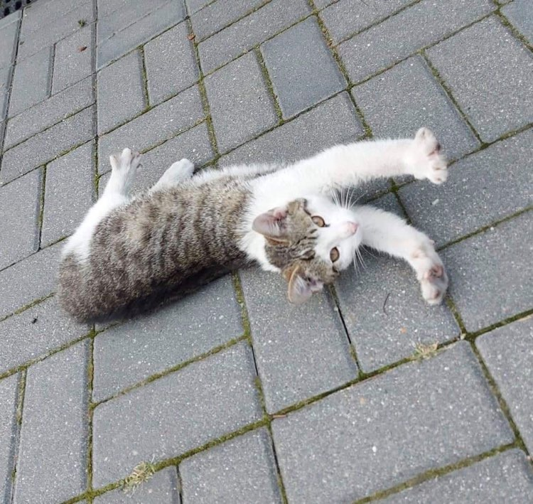 Kotek szuka domu 3