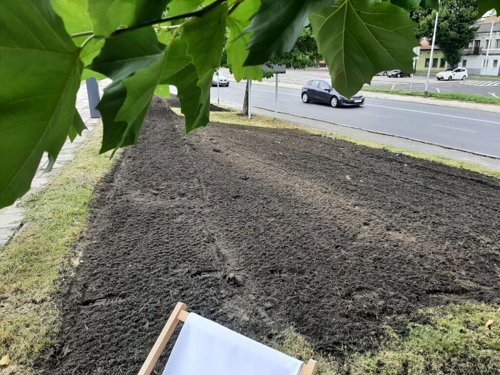 Kolejna antysmogowa łąka w Częstochowie. Tym razem zasiano ją na Rynku Wieluńskim 5