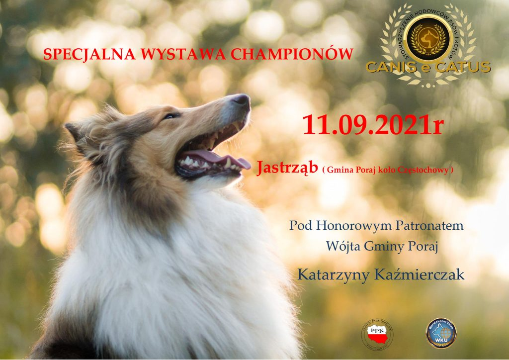 Dwudniowa wystawa psów rasowych 2